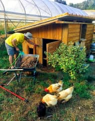 Making sure the 15 chickens have all their need in Italy