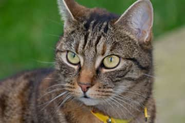 Poppy has diabetes which is managed with twice-daily injections.