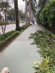 walking path in our neighborhood