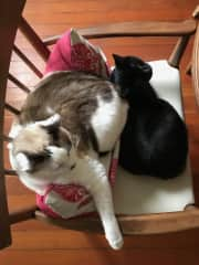 Violet adores her older sister