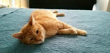 This is our fat cat, O. He lives with us in China.