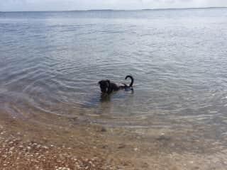 Jak loves swimming.