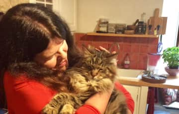 Pauleen with  Chomsky,  returning housesit  for a lovely Maine Coon in Bristol .
