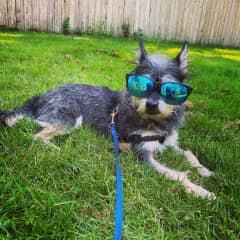 Cool shades bro!