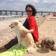 Traveling with my dogs Snowball and Roxy