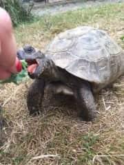 Timmy the Tortoise - Beckenham