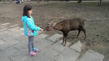 Feeding deer in Nara, japan.