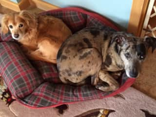 Arwyn and Sukha - stealing the dog bed back!