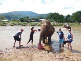Bath time at Elephant Nature Park!