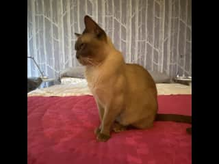 Lucas Valley Eichler: cat-sitting with 2 princely kitties for the holidays