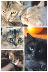 Five gorgeous rescues at Northmead