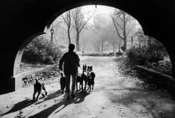 Walking dogs in a park, 1975