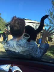 Giving my son and Ollie our farm cat a lift 2 ft on a car bonnet