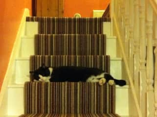 Health & Safety, cat-style