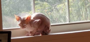 Petey likes the windows