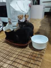 foster home kittens