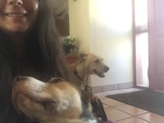 Me with two dogs at a housesit in Mexico (arranged outside this platform).