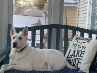 I'm an avid squirrel & bird watcher & will bark to fend them & the barking dog next door off.I know I'm not supposed to bark, so will go in the dining room & when I do to get a treat for being good.