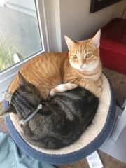 Murphy and Finn