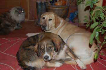 Browny & Eva (rescue dogs)