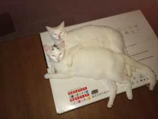 Kitties taking ownership of the printer box