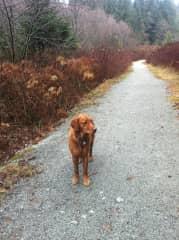 Ezra on a hike