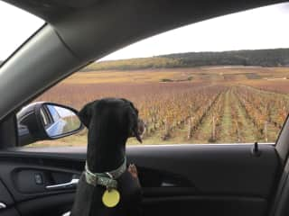 Visiting the Route des Grand Crus, Burgundy, France