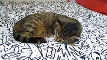 My cat Mourek.