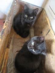 Anya and Flo