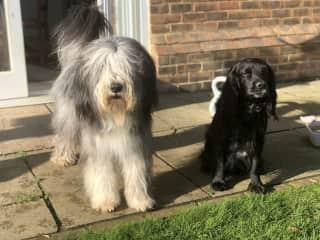 Jasper and Bertie