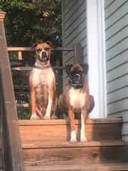 Pups on the porch sunning themselves :)