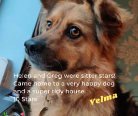 Lively, lovely Velma .. a rescue with oodles of personality