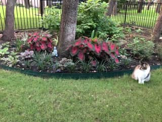 Ryan in my backyard garden!