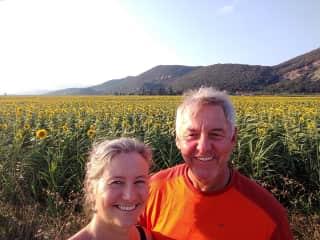Pisa sunflowers!