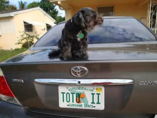 My Dear Toto
