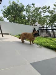 Nacho taking in the neighborhood sites