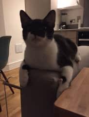 Oscar as a kitten