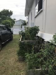 Side of our house and our veggie garden