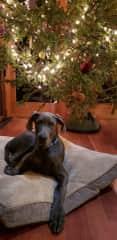 Azul's first Christmas