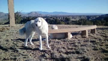 Pet sitting Tess and Brady in the New Mexico desert in a lovely,isolated off grid home.