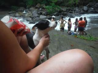 Jennifer (in Costa Rica) wants to take home every stray she finds!