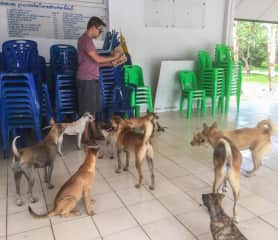 Snacks for the strays at the crematorium (Chiang Mai, Thailand: May-17)