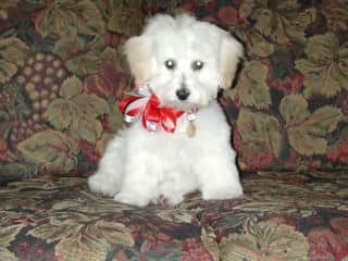 Sushi as a Puppy