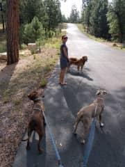 Walking in great company in Arizona