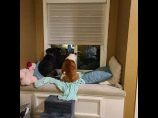 Their favorite window spot (upstairs office)