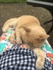 Definitely a lap cat !