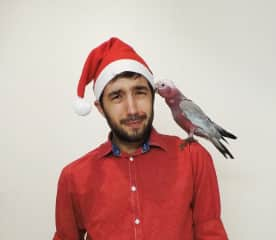 Christmas with Dolly (rescue galah)