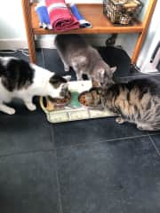 Busy breakfast time in The Hague, housesit in 2019