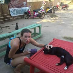 Supporting animal  shelter in Thailand