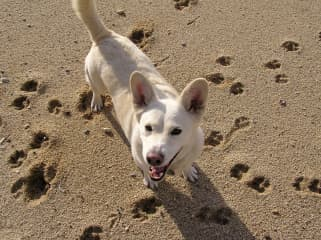 Nevada, my beloved Corgi/Yellow Lab mix. We adopted each other during my senior year of college and adventures together for 15 years. She passed away in 2017 at 16 years of age. I miss her every day.